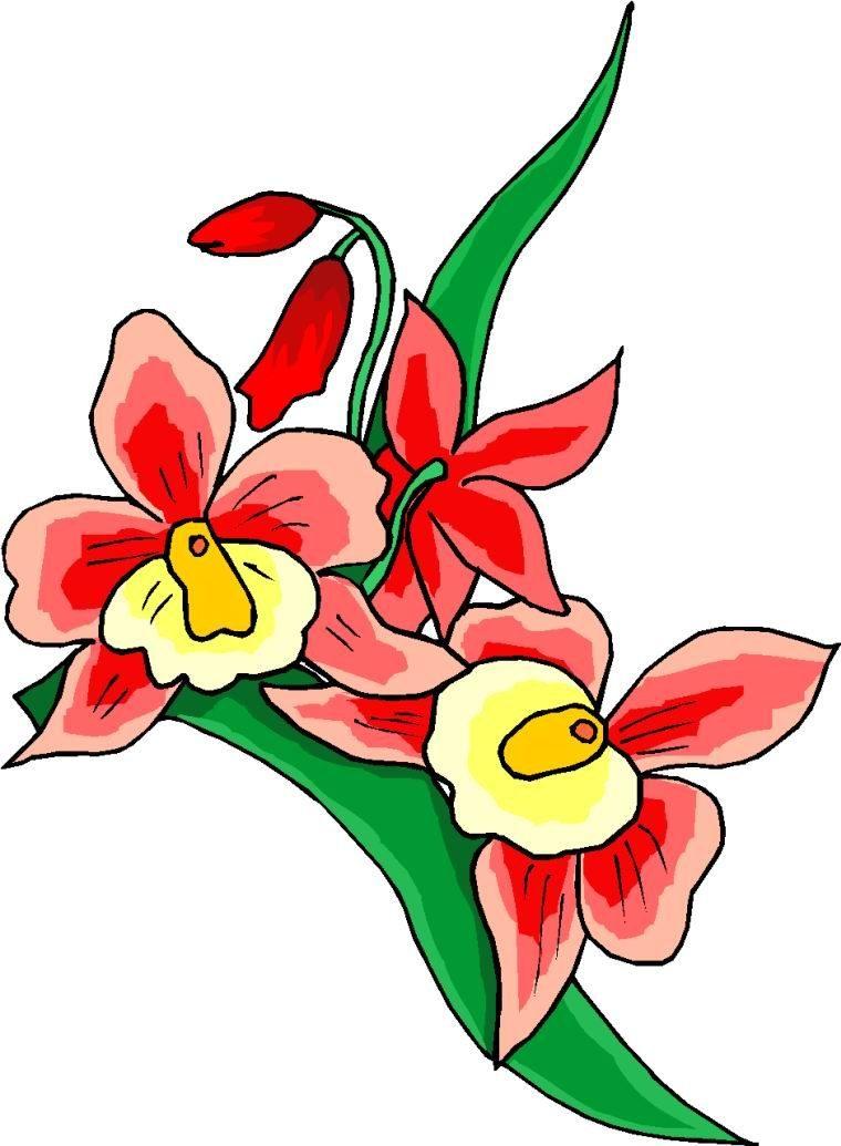 Dibujos de flores rojas  Imgenes y fotos