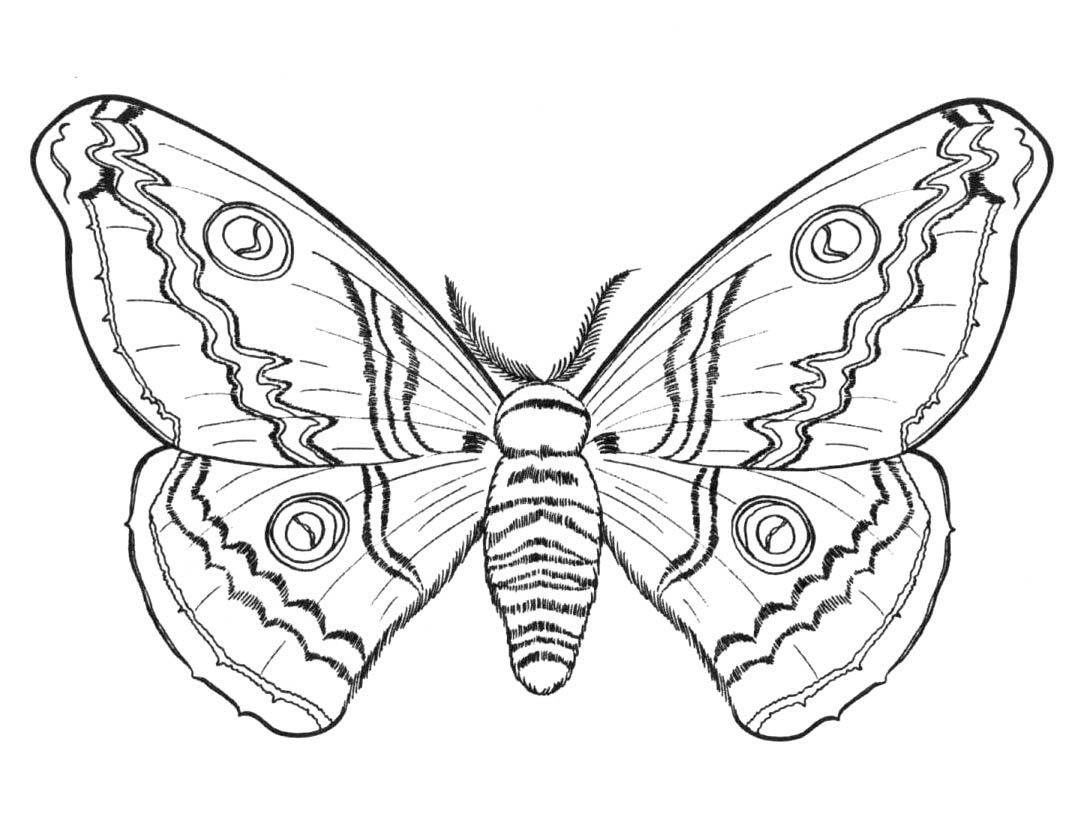 Dibujos De Mariposas Para Colorear