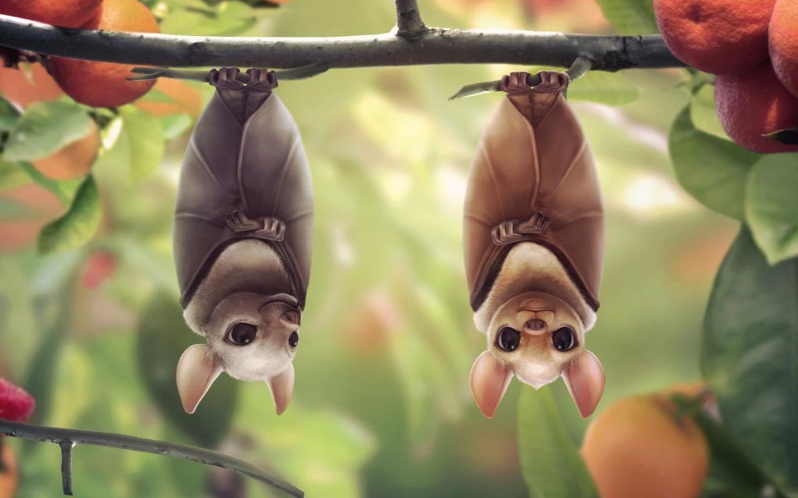 Murciélagos :: Imágenes y fotos